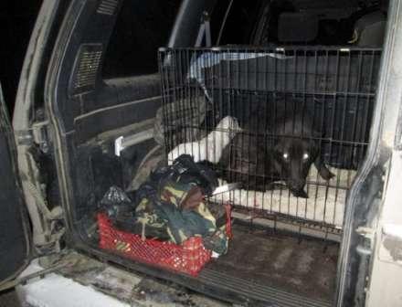 45-летний браконьер изВолгограда ответит заохоту накосулю икабана