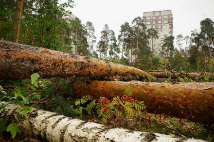 ВВолгограде неизвестные вырубили деревья на400 000 руб.