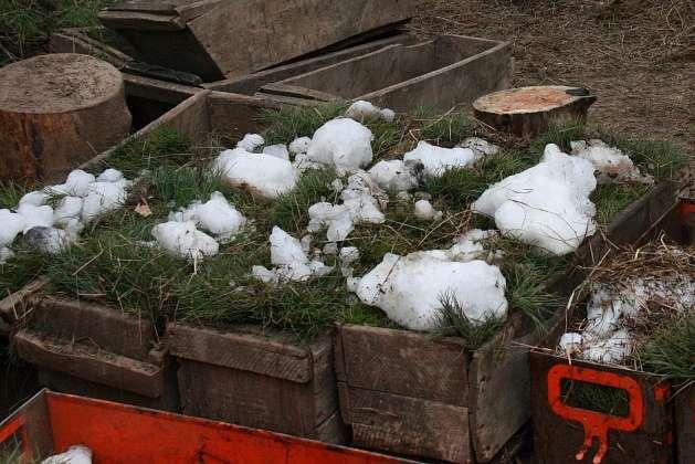 В лесничествах Волгоградской области  идет подготовка к работам по лесовосстановлению